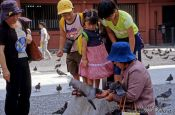 Travel photography:Feeding pigeons, Japan