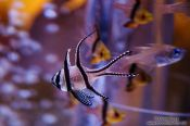 Travel photography:Fish at the Osaka Kaiyuna Aquarium, Japan