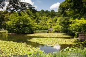 Travel photography:Lake at Kyoto´s Ryoanji temple, Japan