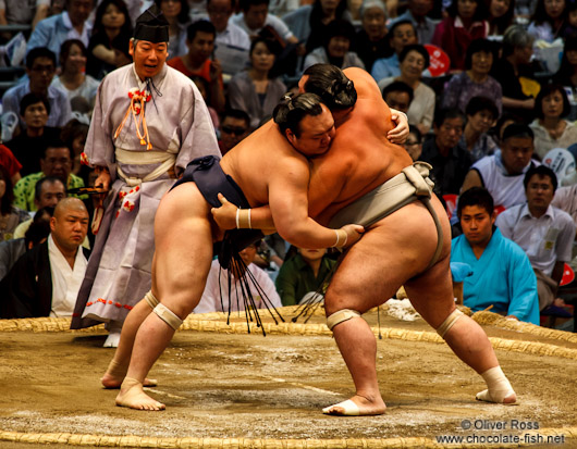 Holding on firmly to each others belts at the Nagoya Sumo Tournament