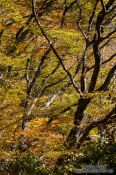 Travel photography:Trees in the Namsan mountains, South Korea