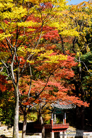 Trees in autmn colour in the Secret Garden of Changdeokgung palace in Seoul