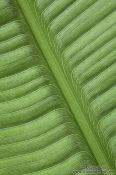 Travel photography:Banana leaf pattern