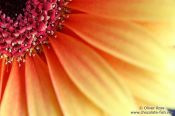Travel photography:Flower close-up