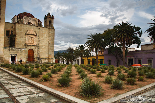 Oaxaca church square with Agave plants