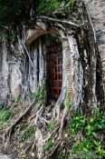 Travel photography:Overgrown ruins of the original house of  Hernán Cortés in La Antigua, Mexico