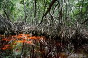 Travel photography:Celestun mangroves, Mexico