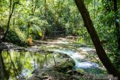 Travel photography:Tropical rainforest near Palenque, Mexico