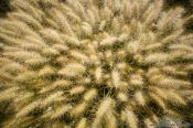 Travel photography:Plants at the Teotihuacan archeological site, Mexico