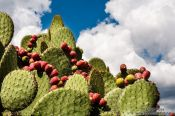 Travel photography:Cactus at the Teotihuacan archeological site, Mexico