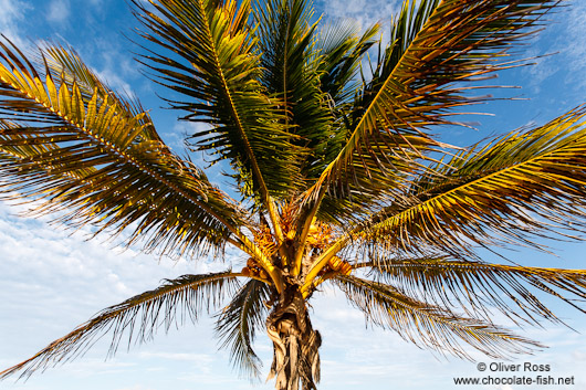Palm tree on Tulum beach