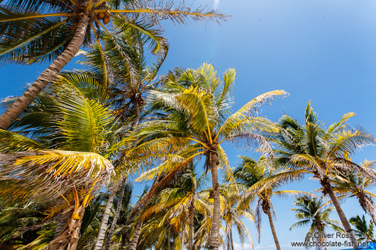 Palm trees at Tulum beach