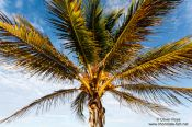 Travel photography:Palm tree on Tulum beach, Mexico