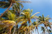 Travel photography:Palm trees at Tulum beach, Mexico