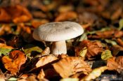 Travel photography:Forest mushroom, Germany