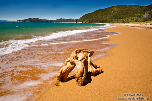 Tree stump on a beach in Abel Tasman National Park