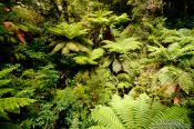 Travel photography:Fiordland National Park, New Zealand