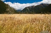Travel photography:Landscape near Lake Rotoiti, New Zealand