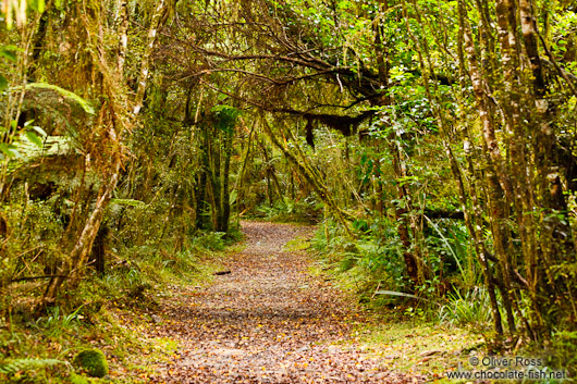 Lake Kaniere Forest