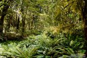Travel photography:Forest in Mount Aspiring National Park, New Zealand