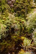 Travel photography:Black-water river in Westland National Park, New Zealand
