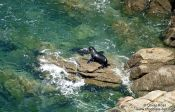Travel photography:Seal in Abel Tasman National Park, New Zealand