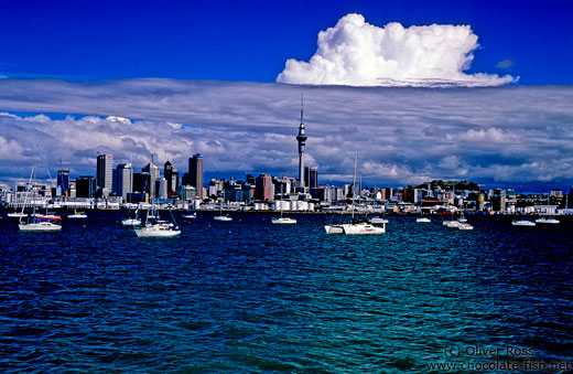Auckland from the water