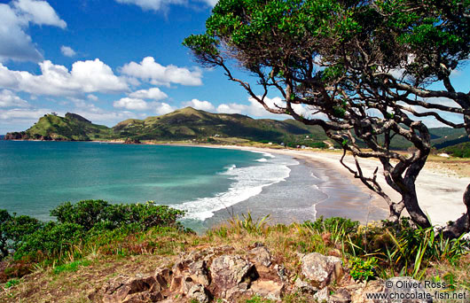 Beach on Great Barrier Island