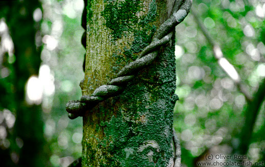 Tree trunk with climbing plant