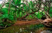 Travel photography:Forest on Great Barrier Island, New Zealand