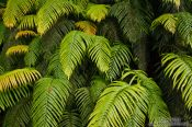 Travel photography:Ferns leaves near Hokitika, New Zealand