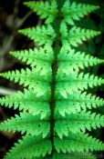 Travel photography:Fern leaf, New Zealand
