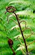 Travel photography:Fern on Heaphy Track, New Zealand
