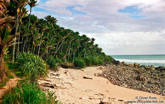 Beach on Heaphy Track