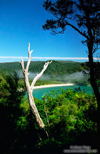 View from the Northern Circuit on Stewart Island