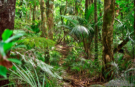 Ferns on the Inland Pack Track