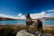 Travel photography:Bronze sculpture of Friday the sheep dog of James MacKenzie overlooking Lake Tekapo, New Zealand