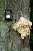Travel photography:Phone and directory on a tree near Halfmoon Bay on Stewart Island, New Zealand