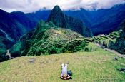 Travel photography:Taking a nap at Machu Picchu, Peru