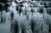 Travel photography:Reeds against the light in Lake Titikaka, Peru
