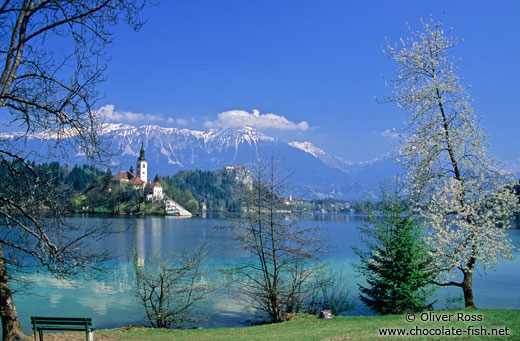 View of island and Bled Castle with Blejsko jezero (Bled lake) and the Slovenian Alps in the background
