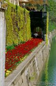 Travel photography:Flower bed along the river in Ljubljana, Slovenia