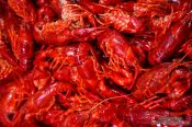 Travel photography:Shrimps at the Bilbao food market, Spain