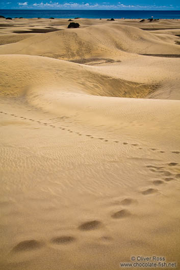 Tracks in the sand dunes at Maspalomas on Gran Canaria