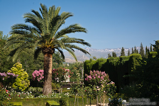Park and gardens of the Generalife of the Granada Alhambra with the Sierra Nevada in the background