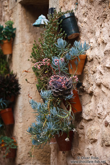Plants outside a house in Valldemossa village