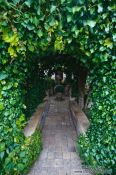 Travel photography:Ivy-covered archway in the Valldemossa Cartuja Carthusian monastery gardens, Spain