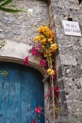 Travel photography:Flowers in Valldemossa village, Spain