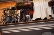 Travel photography:Dog on a balcony in Palma, Spain