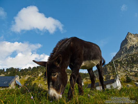Donkey at the La Renclusa refuge at the base of the Aneto mountain